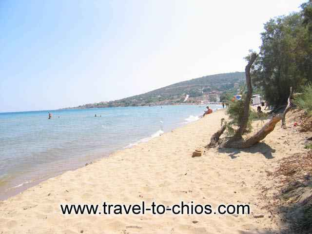 View of the sandy beach of Karfas in Chios island Greece, where the pine trees reach the sea